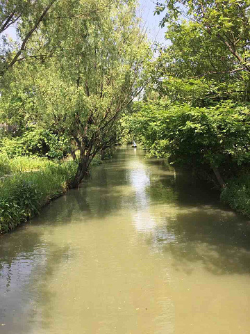 """""""你会被迷人的风景所吸引,空气是多么的清新,在市内,能有这么大,这么美的湿地很少很少,而西溪湿地做到了_西溪国家湿地公园""""的评论图片"""