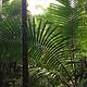 厄尔尼诺云雀国家森林公园
