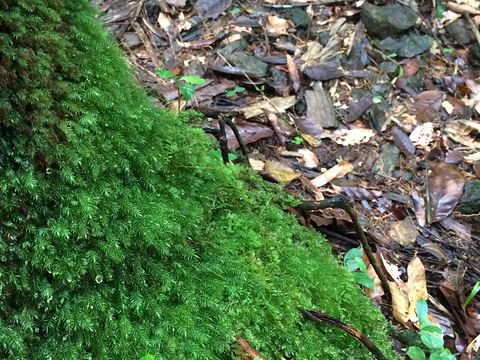 厄尔尼诺云雀国家森林公园旅游景点图片