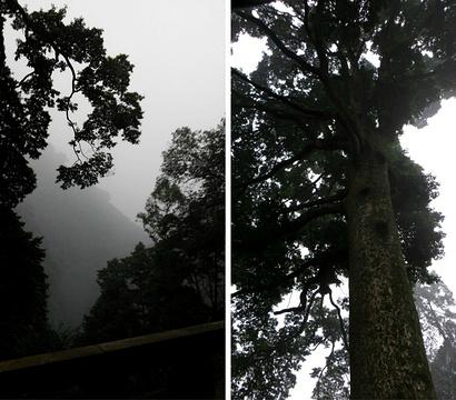雷音寺旅游景点攻略图