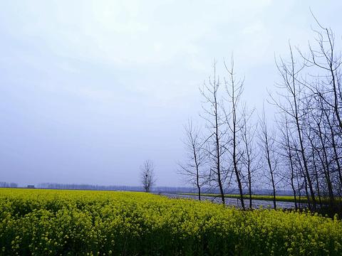 蔡甸消泗油菜花旅游景点图片