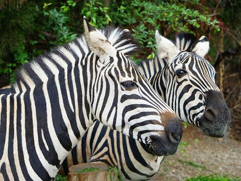 云南野生动物园旅游景点图片