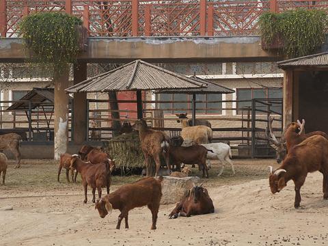郑州市动物园旅游景点图片