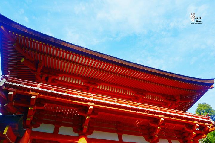 """""""春日大社是奈良最负盛名的世界文化遗产之一 奈良之行最喜欢的一个景点,原本以为只是一座普普通..._春日大社""""的评论图片"""