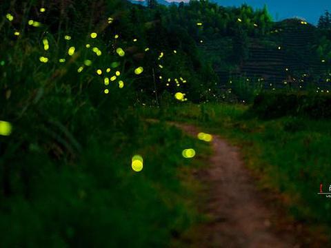 萤火虫梦幻谷旅游景点图片