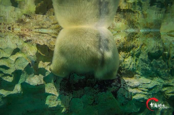 青岛海昌极地海洋公园图片