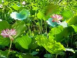 华南农业大学湿地公园