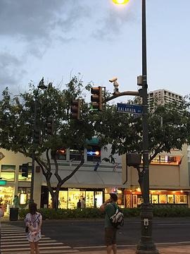 卡拉卡瓦大街旅游景点攻略图