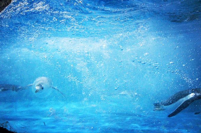 圣亚海洋世界 极地馆图片