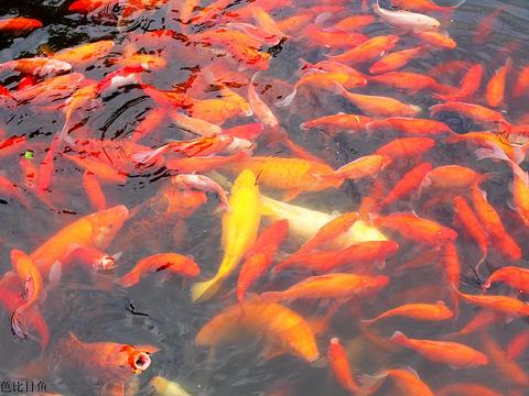 花港观鱼旅游景点图片