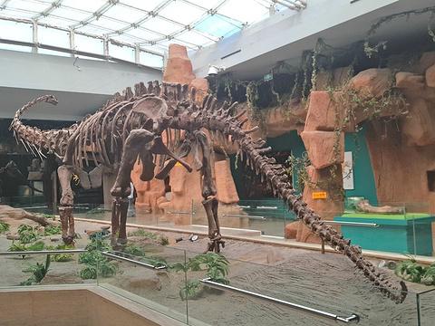 甘肃省博物馆旅游景点图片