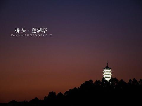 莲湖公园旅游景点图片