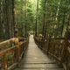 峡谷浮石林