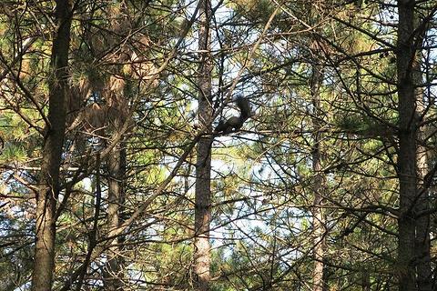 帽儿山国家森林公园旅游景点图片