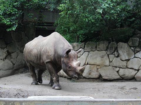 上野动物园旅游景点图片
