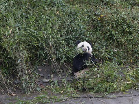 碧峰峡野生动物园旅游景点图片