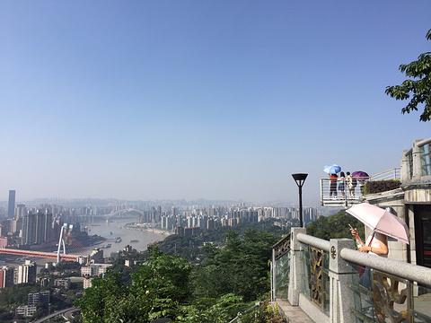 南山一棵树观景台旅游景点图片