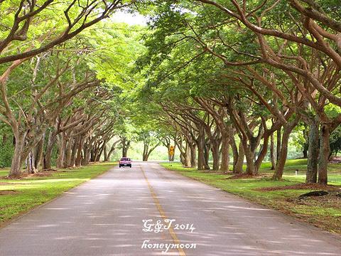 劳劳湾高尔夫球场旅游景点图片