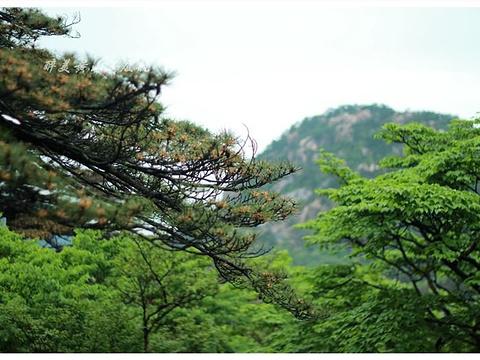 黑虎松旅游景点图片