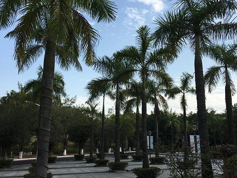中心湖公园旅游景点图片