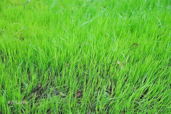 扬州红山体育度假村图片