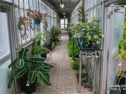 北海道大学植物园旅游景点图片