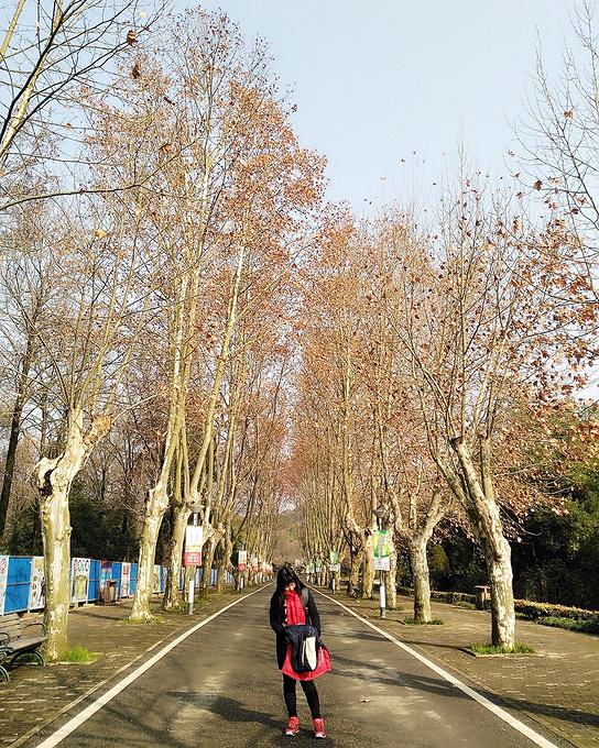 东湖磨山景区图片