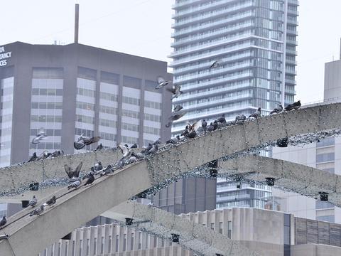 新市政厅旅游景点图片