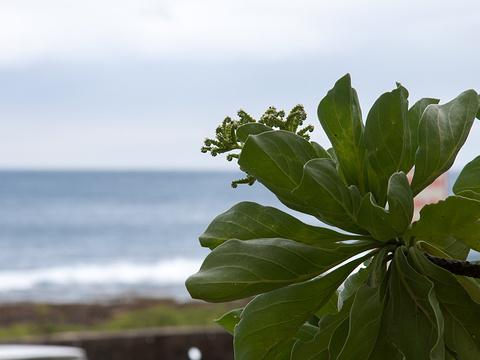 香蕉湾旅游景点图片