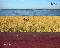 【说走就走❤600公里の追逐】到兴城&盘锦享一场红黄蓝的视觉盛宴!