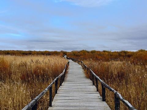 达里诺尔湖旅游景点图片