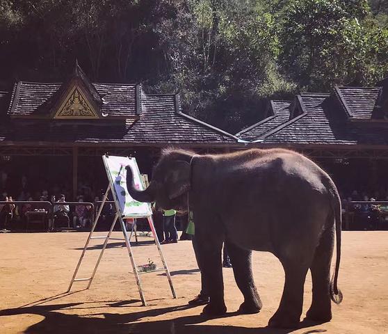 """""""以前去泰国骑大象后特意上网查了查,如何管理,后来觉得不能再骑大象了,这次来西双版纳说行程中有野..._野象谷""""的评论图片"""
