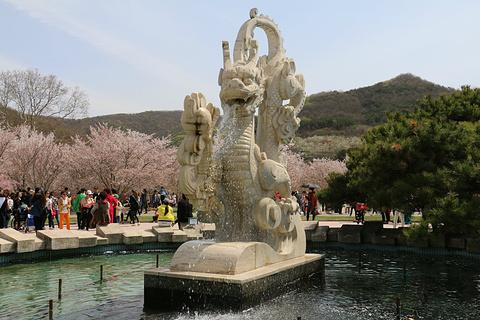 龙王塘樱花园旅游景点攻略图