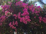 圣塔拉富士岛旅游景点攻略图片
