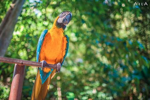 巴厘野生动物园旅游景点攻略图