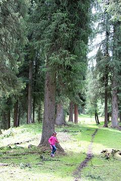 雪岭云杉自然保护区旅游景点攻略图