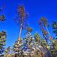 白桦林驯鹿园