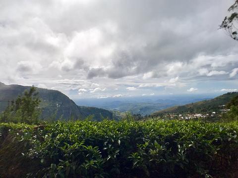 立顿茶厂旅游景点攻略图