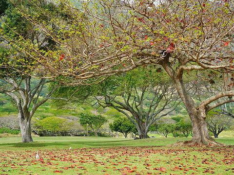 古兰尼地区公园旅游景点图片