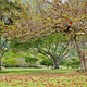 古兰尼地区公园