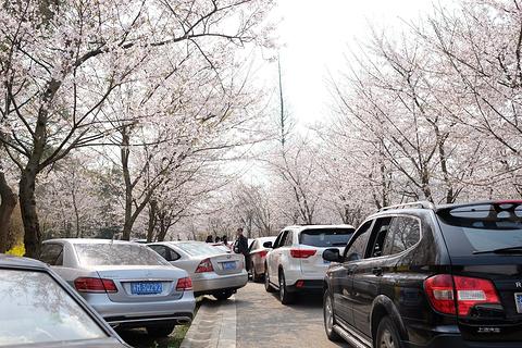 樱花谷旅游景点攻略图