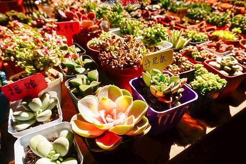 斗南花市的图片