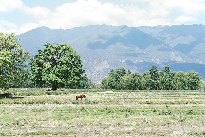 """""""远处这棵明星树好像是叫做""""夫妻树"""",经常..._夫妻树""""的评论图片"""