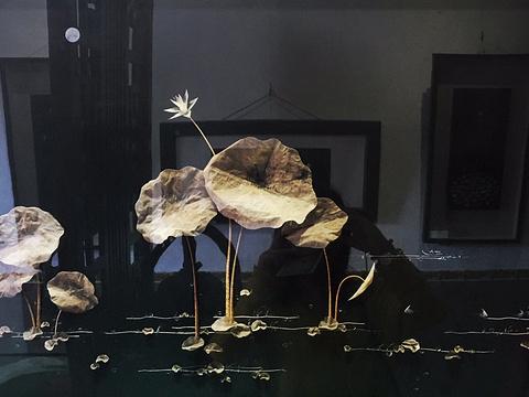 东方鱼骨艺术馆旅游景点图片