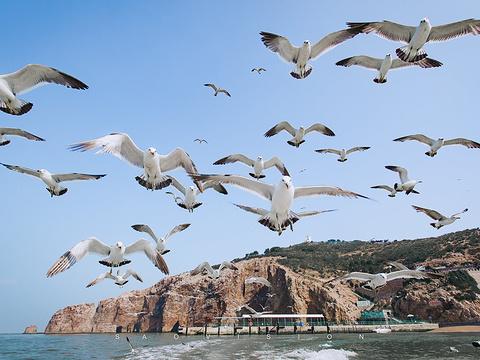 海驴岛旅游景点图片