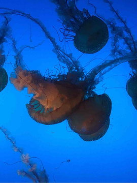 南京海底世界旅游景点攻略图