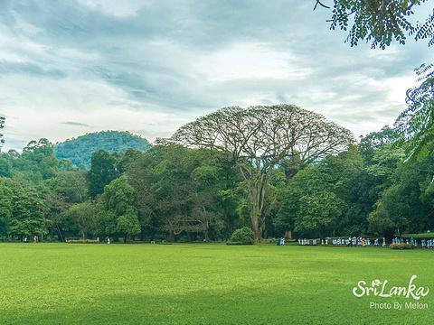 康提皇家植物园旅游景点图片