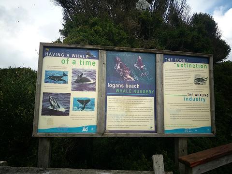 洛根海滩赏鲸平台旅游景点攻略图
