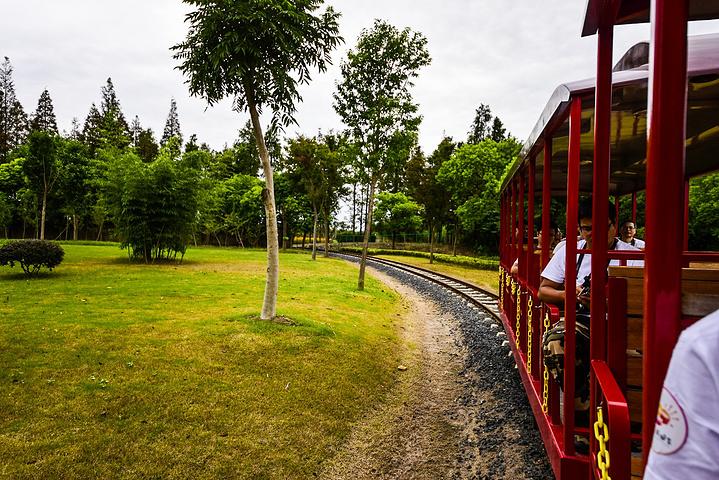 """""""作为云澜湾度假区的四季花海景区是一处非常优美而休闲的地方。在小火车上观赏这花海是不是非常有趣呢_云澜湾·四季花海乐园""""的评论图片"""