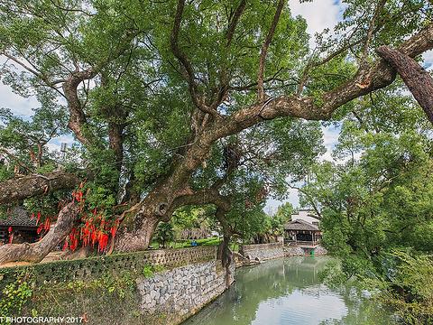 严田古樟民俗园旅游景点图片